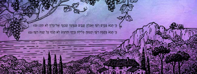 Torah Insights: Field or Vineyard?