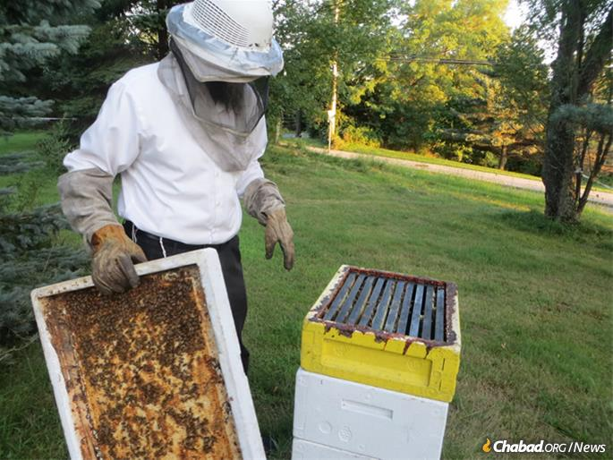 The rabbi takes off one of the frames to show the inside of the hive. (Photo: Carin M. Smilk)