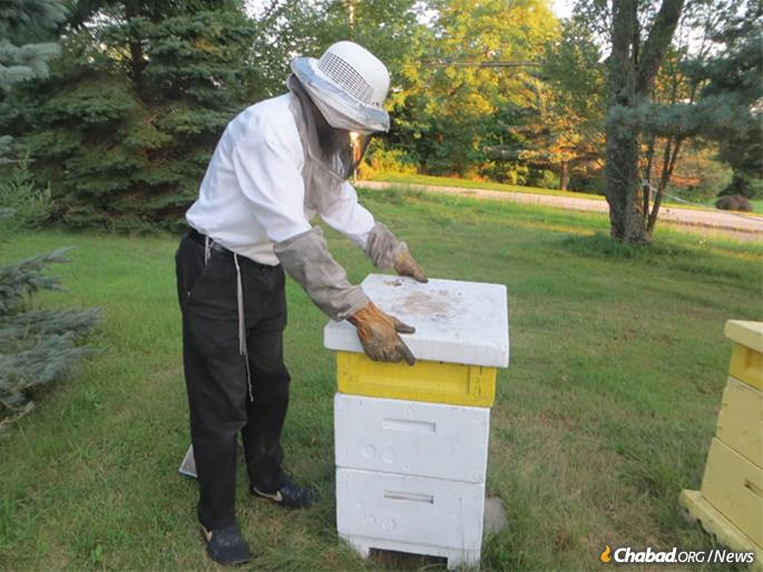 Replacing the lid on the hive, a box typically made of wood or hard Styrofoam. (Photo: Carin M. Smilk)