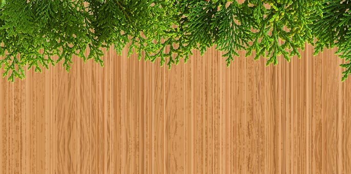 Why Is the Sukkah Covered With Plant Material (Schach)? - Sukkot & Simchat  Torah