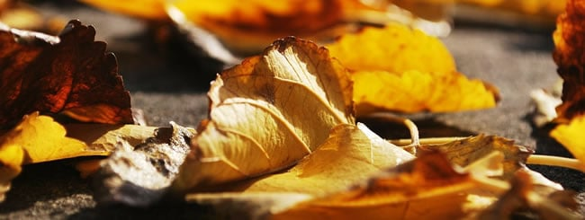 Insight: The Rabbi Who Raked Leaves for His Ill Wife