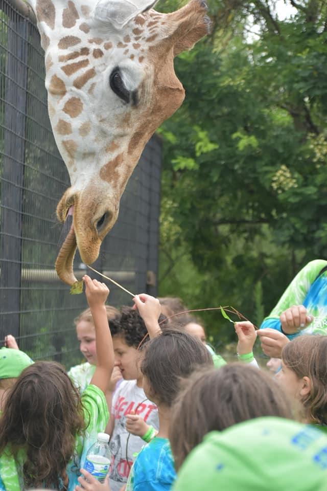 Gan Giraffe.jpg