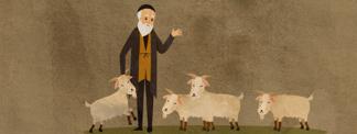 Herschel Goat