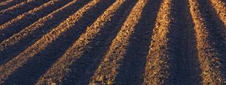 Choresh - Plowing