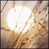 Wheat & Dates