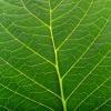 Кто раскрашивает листья