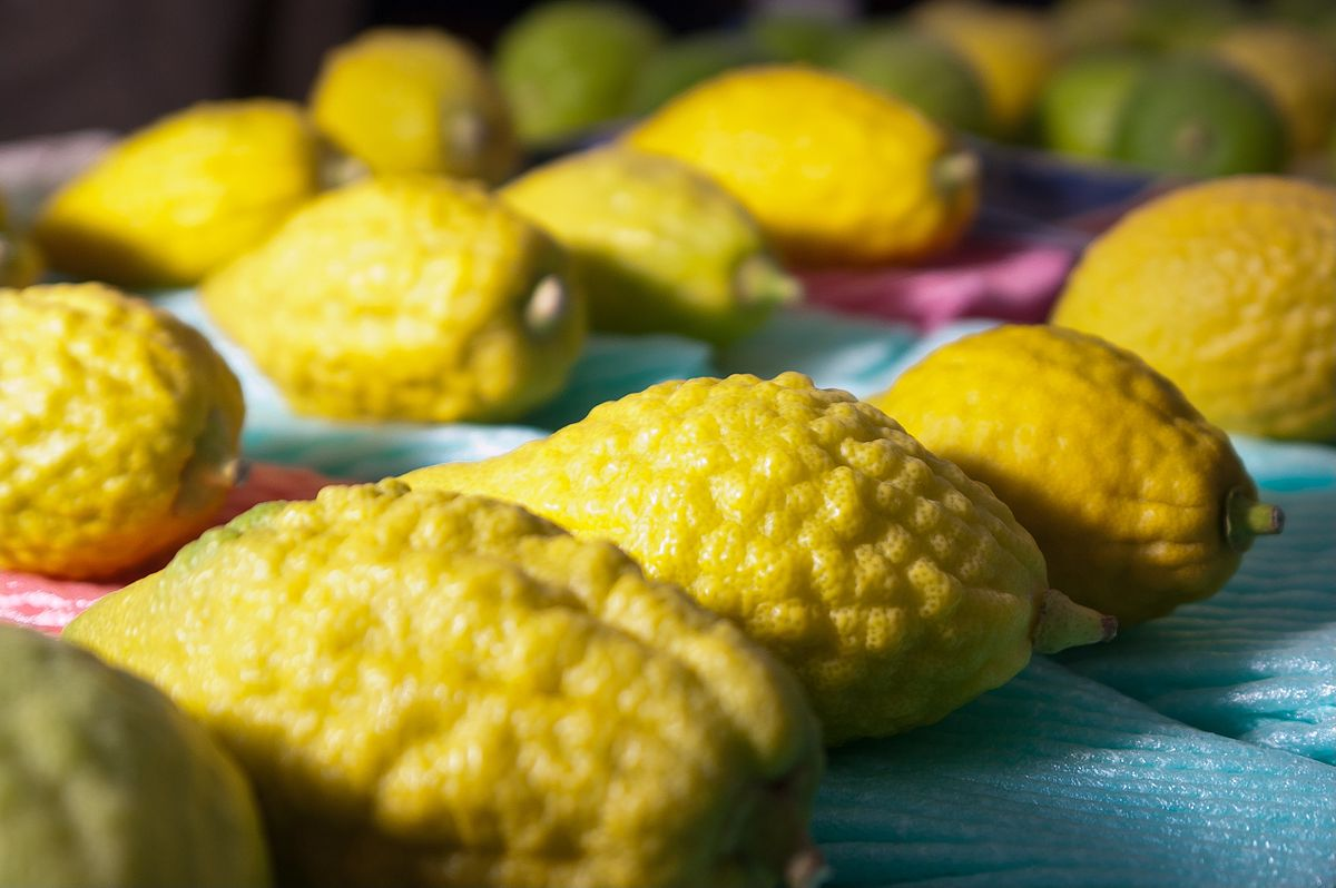 1200px-Etrog_at_the_Market.jpg