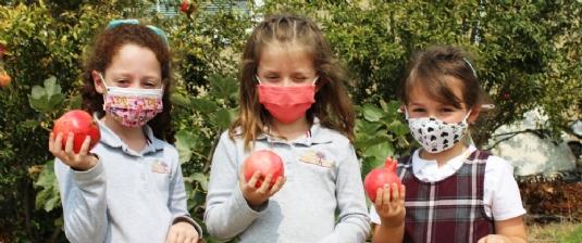 Picking pomegranates for Rosh Hashanah.jpg