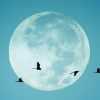 The Lunar Files