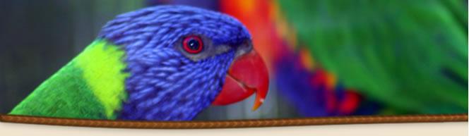 Parrots - Birds - Noah's Ark