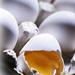Leche y Huevos