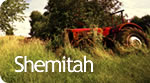 Shemità