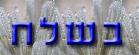 Daily Zohar - Beshalach
