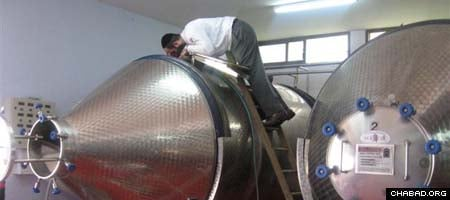 Rabbi Zeev Raskin, co-director of Chabad-Lubavitch of Cyprus, inspects vinimatic tanks at the island's Lambouri Winery prior to its first-ever run of kosher wine.