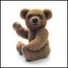 Eagle or Teddy Bear?
