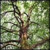 Aνθρώπινο Δέντρο