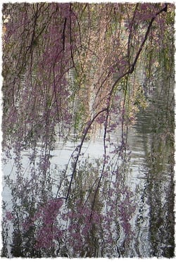 אגם בגן הבוטני בברוקלין. צילום: וואלי גובז