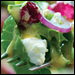 Goat Cheese Walnut Salad