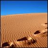 Как победить пустыню