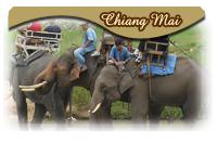 Chabad Chiang Mai Tourist Information