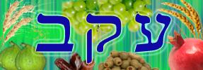 Daily Zohar - Eikev