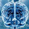 O Cérebro de 48 Horas