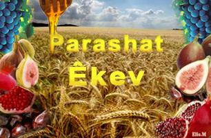 Torah Portion: Êkev