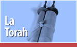 Making A Torah