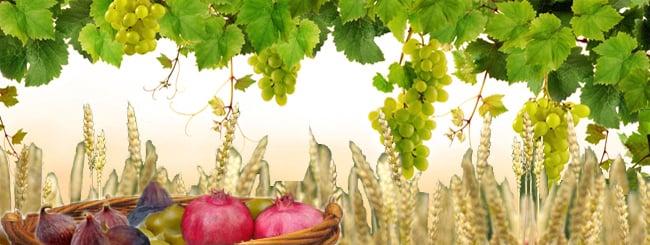 Tu B'Shevat - The Zohar: A Tu B'Shevat Fruit Cocktail
