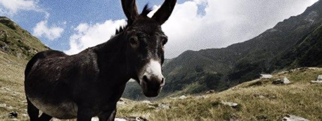 Nos chroniqueurs sur la Paracha: Il était un âne...