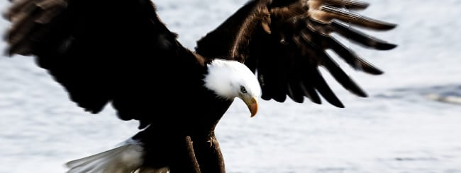 On An Eagle's Wings