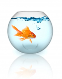 Gold fish bowl dating