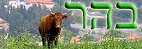 Daily Zohar - Behar
