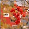 Die Gesetze des Segensspruches über einen blühenden Obstbaum