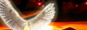 Wings of Flight