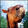 От купца до лошади
