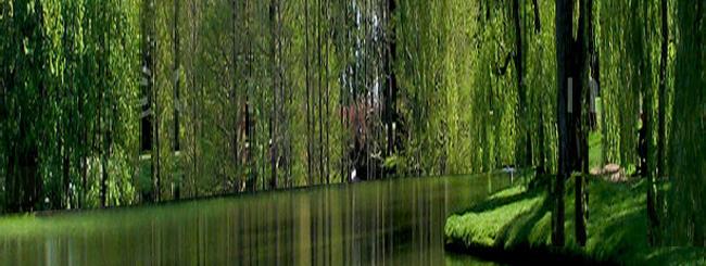 Hoshana Raba: The High Humble Willow