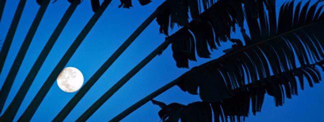 Nos chroniqueurs sur la Paracha: Pourquoi Pessa'h tombe-t-il à la pleine lune?