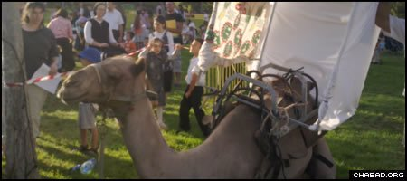 A camel with a sukkah perched on its back drew a crowd at Jerusalem's Independence Park Monday during the Jewish holiday of Sukkot.