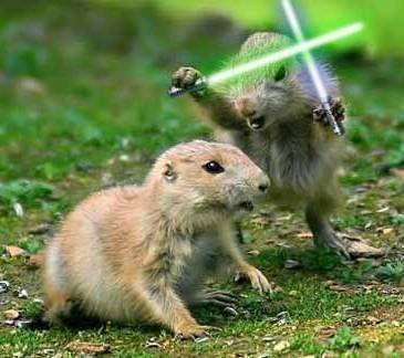 lightsaber-animals.jpg