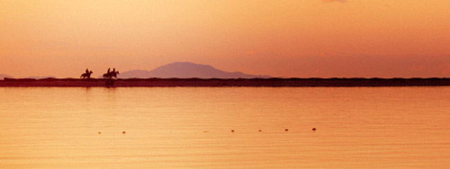 Did Pharaoh die in the Red Sea?