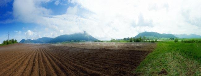 בהר: פרשת בהר: שמיטה אצל הר סיני