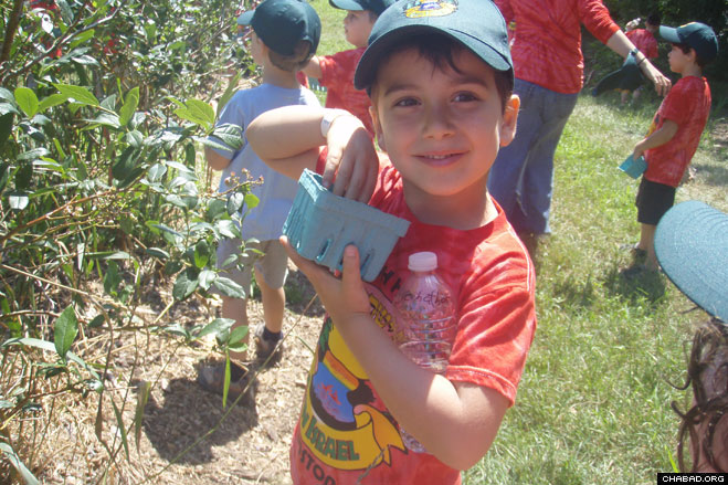 Campers from Camp Gan Israel Shaloh House of Boston enjoy a day berry-picking at a nearby farm.