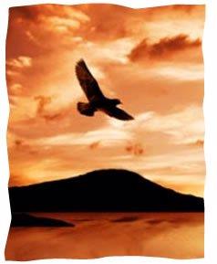 Ligero como el águila