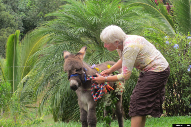 Vicky Seigel's husband Richard hosted a redemption ceremony for his firstborn donkey Yissachar at their citron orchard in Kauai.