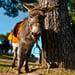 Saddling Up Mashiach's Donkey