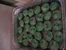 Green Shabat