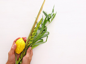 Order your Lulav and Etrog
