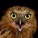 The Bird of Divine Providence