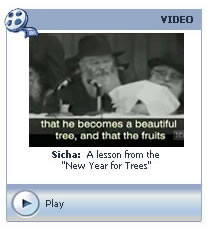 Sicha: A lesson from the New Year for Trees